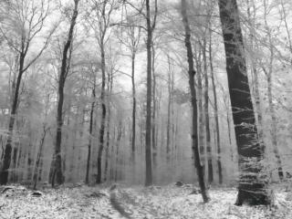 Winterstimmung im Wald